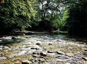 جنگل پلنگ دره روزنه ای به طبیعت بکر مازندران