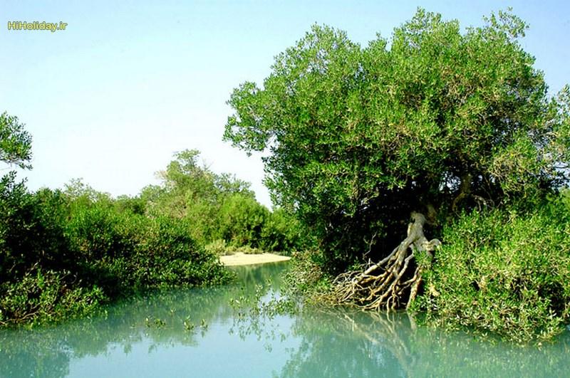 Hara-Forest-Qeshm