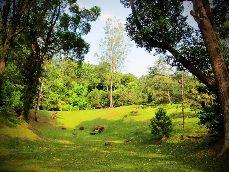 باغ گیاه شناسی پنانگ Penang Botanical Garden